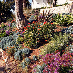 residential-resources-california-friendly-landscaping
