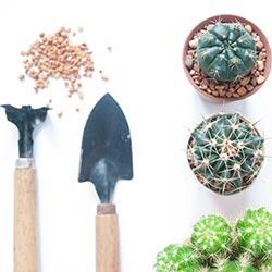 image of gardening tools