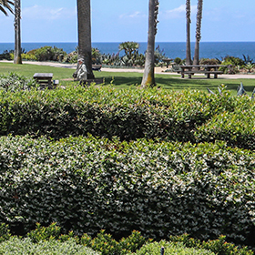 Corona-del-Mar-garden