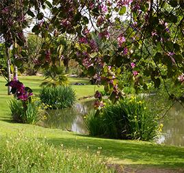 Fullerton-Arboretum