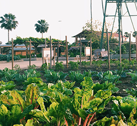 Orange-County-Fair-Centennia-farm