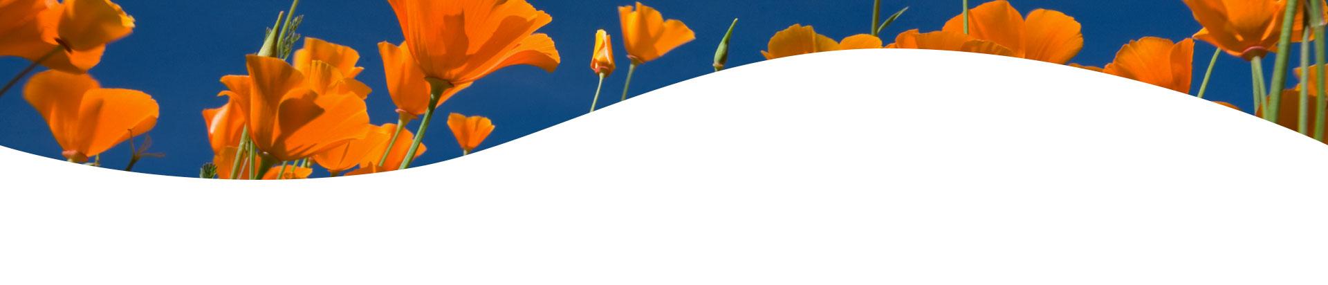 header-banner