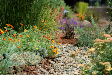 The water-wise garden of Folsom resident Jennifer Hageman on May 20, 2013.